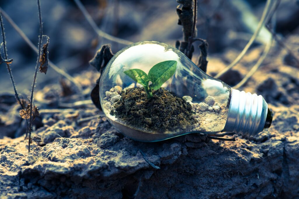 Glühbirne mit einer Pflanze