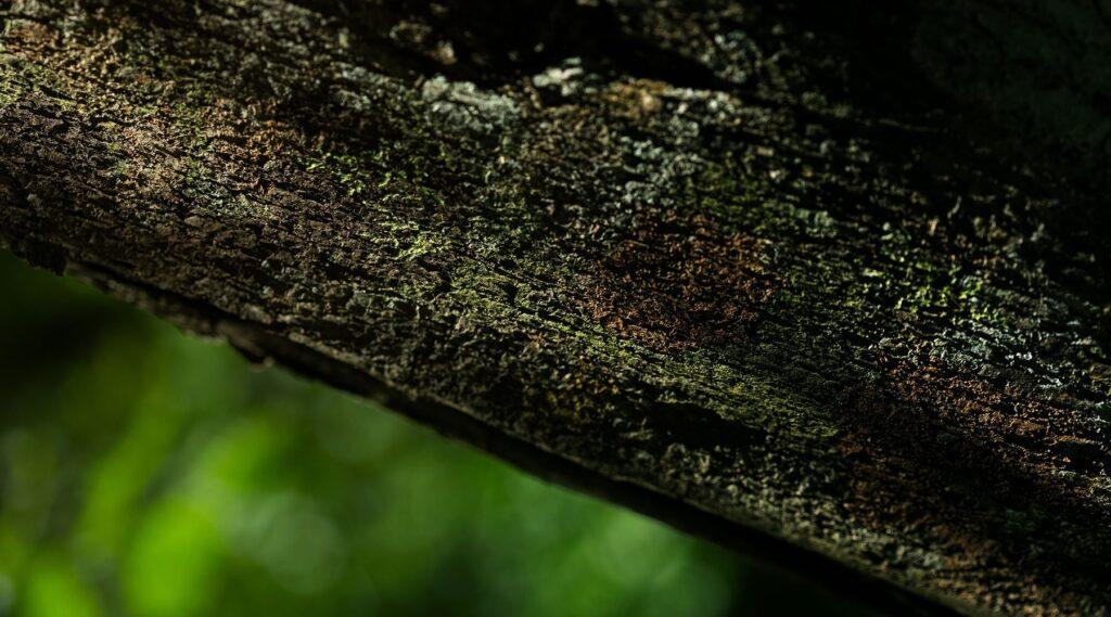 Dem Celurix Team steht Nachhaltigkeit am Herzen. Deswegen pflanzen wir für jeder Reparatur einen Baum.